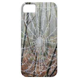 Web of European Garden Spider iPhone Case