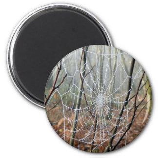 Web of European Garden Spider Magnet