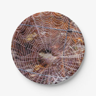 Web of European Garden Spider Paper Plate