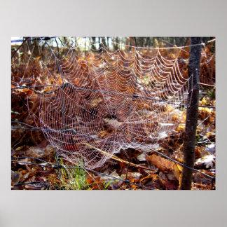 Web of European Garden Spider Poster