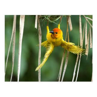 Weber Bird Postcard