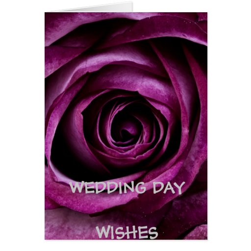 Wedding Day Wishes Deep Purple Rose Greeting Cards