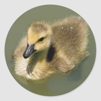 Wee Goose Swimming Classic Round Sticker