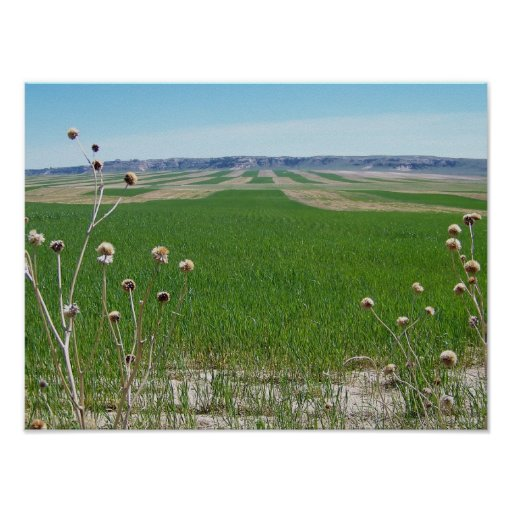 Weed and Field at Chugwater Wyoming Posters