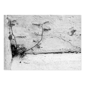 Weed on Concrete Steps Business Card