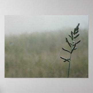 Weed Stalk at Dawn Poster