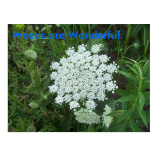 Weeds are Wonderful. Postcard