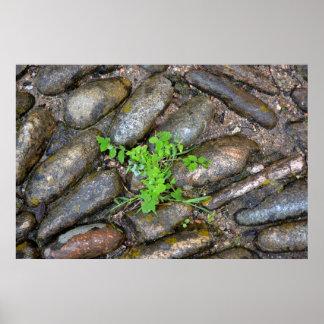 Weeds between paving-stones, Sardinien, Poster