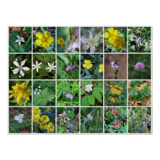 Weeds Collage Poster