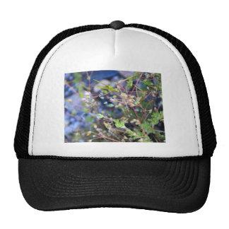Weeds Trucker Hat