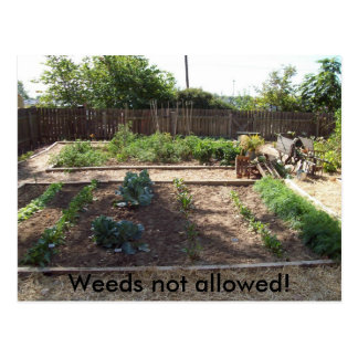 Weeds not allowed! postcard