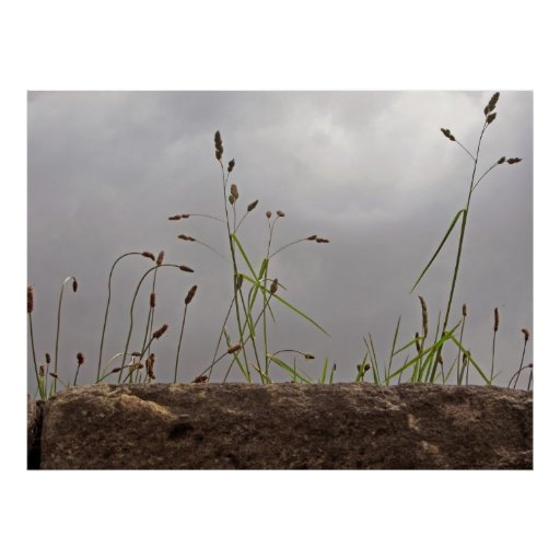 Weeds on a Wall Poster/Print