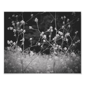Weeds Whimsy B&W Flower Poster