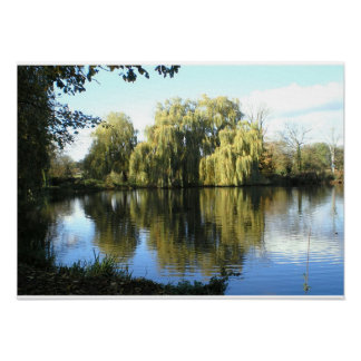 Weeping willow by the lake poster