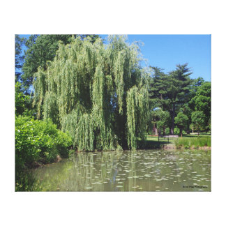 Weeping Willow on Pond Missouri Photography Canvas Print