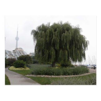 Weeping Willow Toronto Postcard