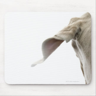 Weimaraner 2 mouse pad