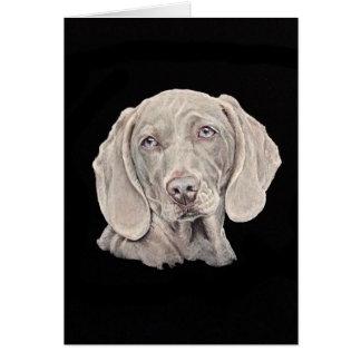 Weimaraner dog on black. card