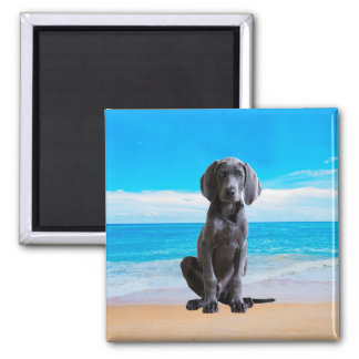 Weimaraner Dog Sitting On Beach Magnet