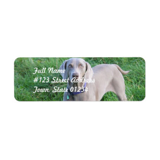 Weimaraner Lovers Mailing Labels