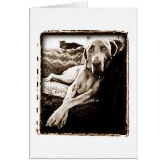 """Weimaraner Nation : """"Ballou's Chair"""" Card"""