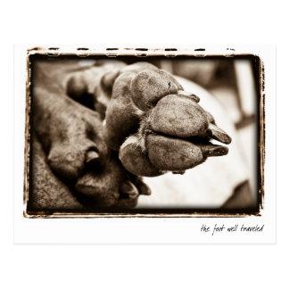 "Weimaraner Nation : ""The Foot Well Traveled"" Postcard"