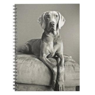 Weimaraner Portrait Spiral Notebook