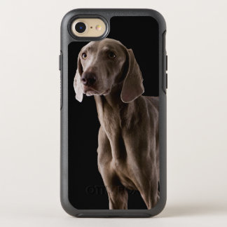 Weimaraner, studio shot OtterBox symmetry iPhone 8/7 case