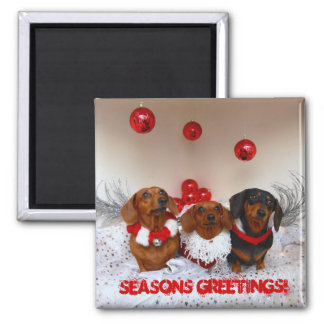 "Weiner Dog Christmas, "" Seasons Greetings!"" Square Magnet"