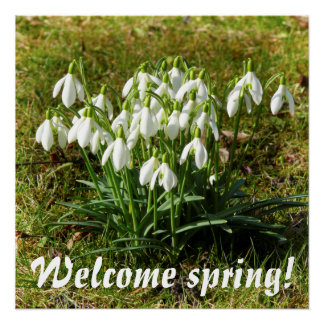 Welcome spring! Snowdrops 02.2