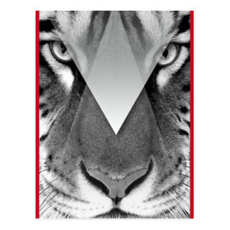 Wellcoda Amazing Tiger Cat Face Wild Life Postcard
