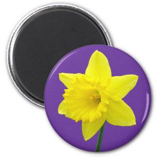 Welsh Daffodil - II 6 Cm Round Magnet