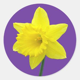 Welsh Daffodil - II Classic Round Sticker