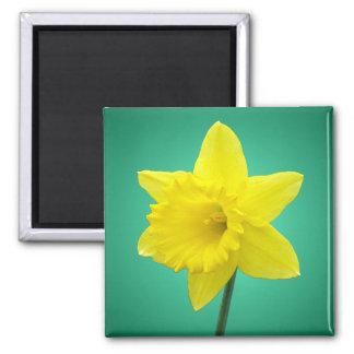 Welsh Daffodil - IV Square Magnet
