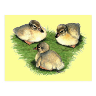 Welsh Harlequin Ducklings Postcard