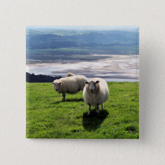 WELSH MOUNTAIN SHEEP 15 CM SQUARE BADGE