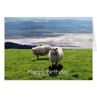 WELSH MOUNTAIN SHEEP CARD