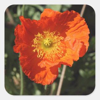 Welsh Poppy (Orange) Sticker