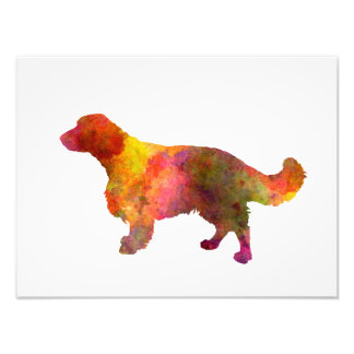 Welsh Springer Spaniel in watercolor Photograph