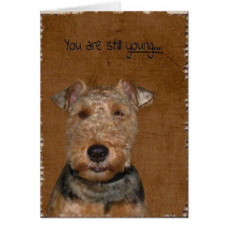 Welsh Terrier Birthday humour Card