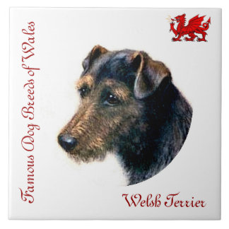 Welsh Terrier Collector's Tile