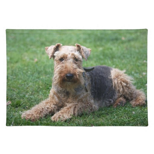 Welsh Terrier dog beautiful cute photo placemat