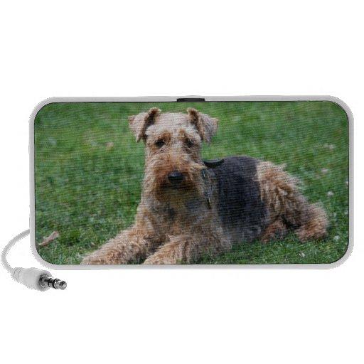 Welsh Terrier dog beautiful doodle speakers