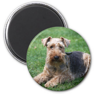 Welsh terrier dog beautiful photo magnet