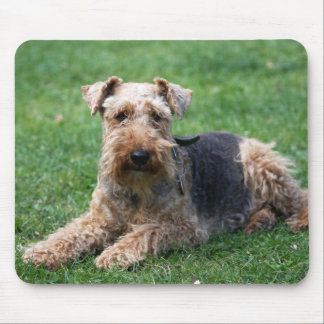 Welsh terrier dog beautiful photo mousepad