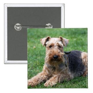 Welsh terrier dog beautiful photo pin, button