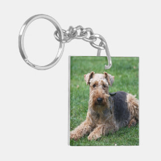 Welsh Terrier dog cute beautiful photo, gift Double-Sided Square Acrylic Key Ring