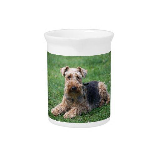 Welsh terrier dog cute photo pitcher, jug
