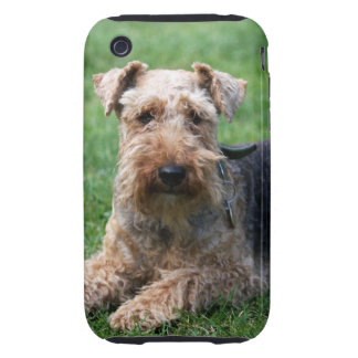Welsh Terrier dog photo iphone 3G case mate tough Tough iPhone 3 Case