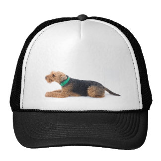 Welsh Terrier Mesh Hats